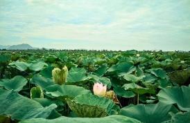 SoonYeInn [Near Mandalay]